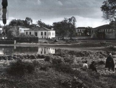 Salesi Greqi