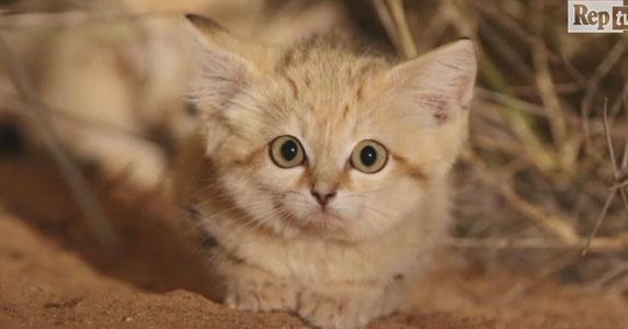 macet e shkretetires