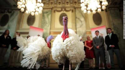 The National Turkey Federation holds a media availability with the National Thanksgiving Turkey, and its alternate 'wingman,' the day before the 70th presentation of the national turkey to President Donald Trump at the Williard InterContinental November 20, 2017 in Washington, DC. After Trump ceremoniously 'pardons' the turkey at the White House on Tuesday both birds will reside at their new home, 'Gobbler's Rest,' at Virginia Tech.