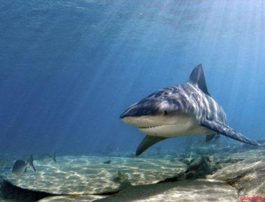 Peshkaqenet-e-ujrave-te-embla-ne-lumenj-dhe-ne-liqene