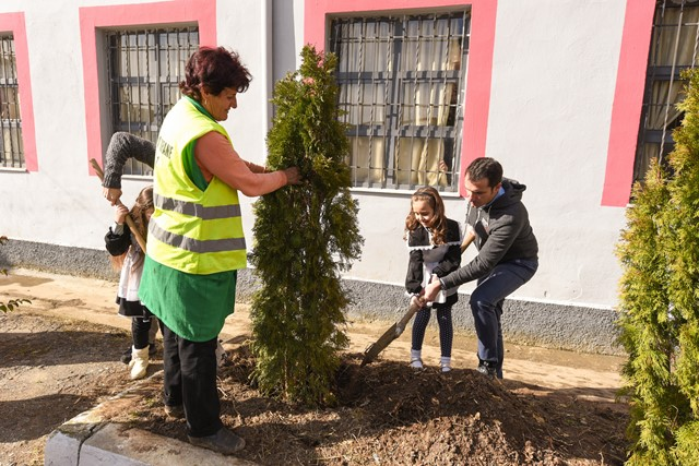 Veliaj dhe Cana mbjellin peme ne shkollen Kol Jakova (3)