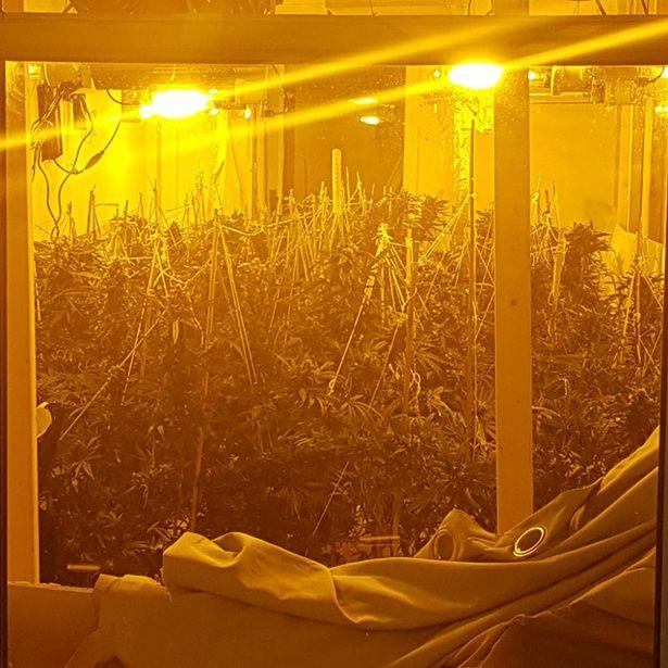 Drug-raids