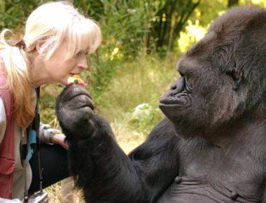180621115715-01-koko-the-gorilla-exlarge-169