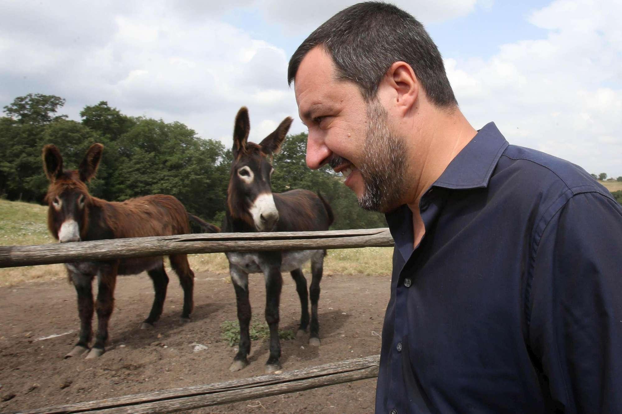 Salvini 16