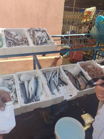 Mish, Peshk Miell Elbasan (5)
