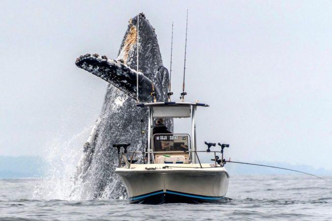 Dw Whale Breach 190515 2x