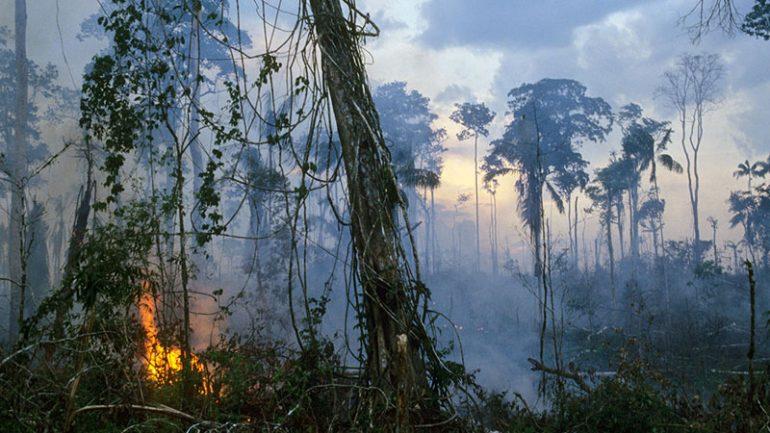 Amazon Rainforest Destroyed Update