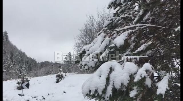 Bora Ne Dardhe