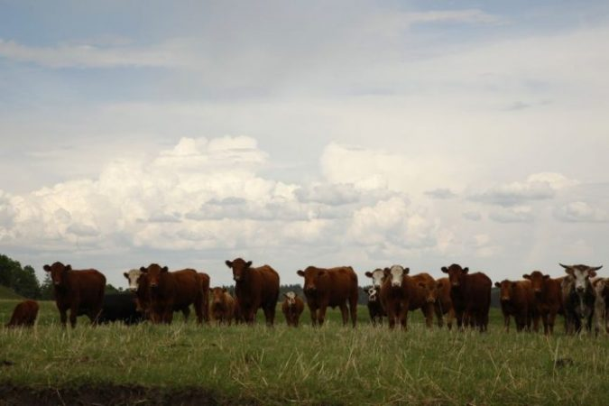 Cba Cattle Against Sky1000 696x464