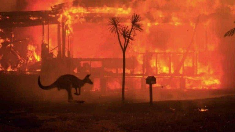 Incendi Australia Animali 1 768x432 (1)