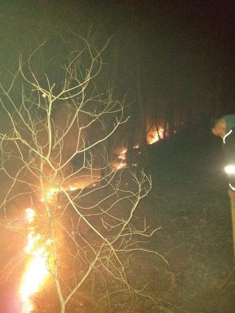 Zjarri Memaliaj (3)