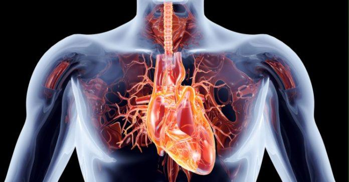 Humanheartmain Resize Md 696x364