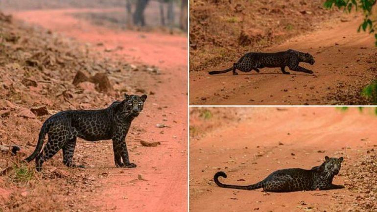 Leopardi I Zi (1)