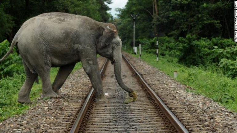 210506170313 03 Human Wildlife Conflict Elephant Exlarge 169 780x439