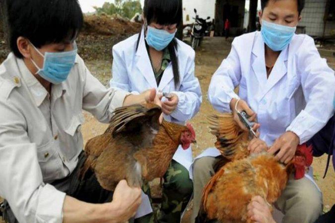 H10n3 Bird Flu