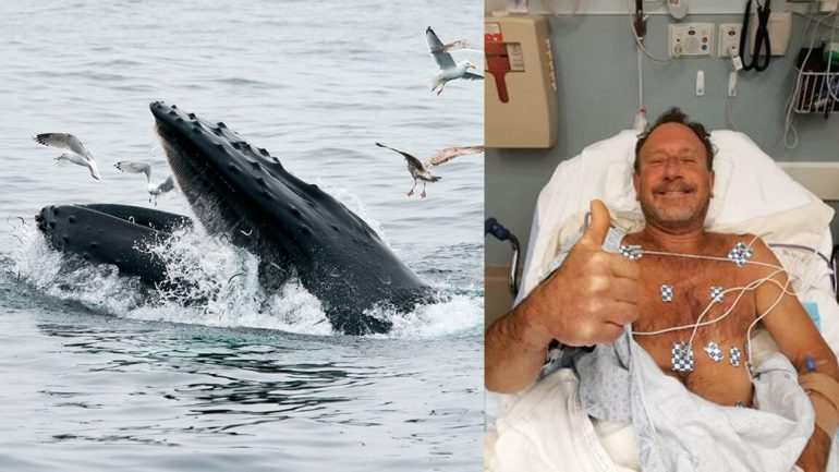 Diver Swallowed By Whale4